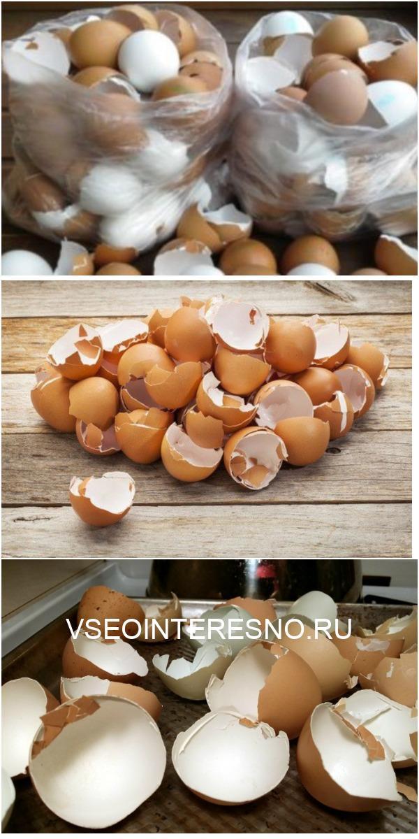 Вот почему я перестала выбрасывать яичную скорлупу! Превращаю ее в нечто потрясающее…