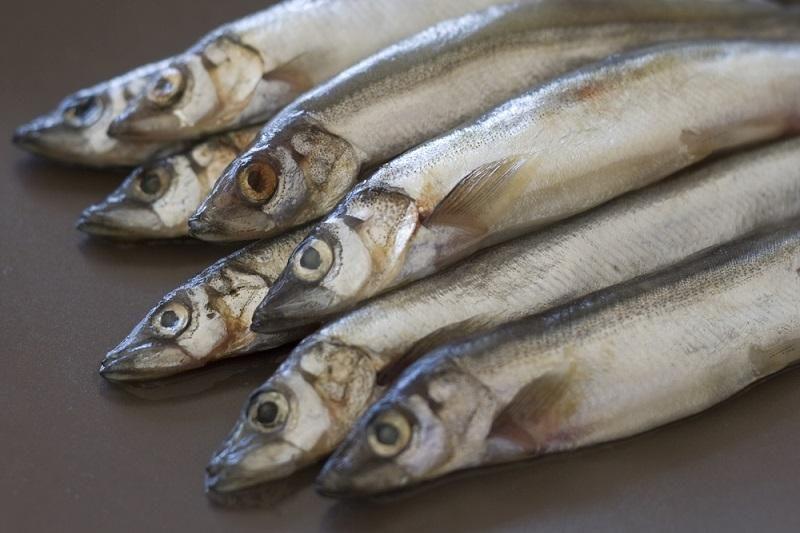 raw-fish-capelin