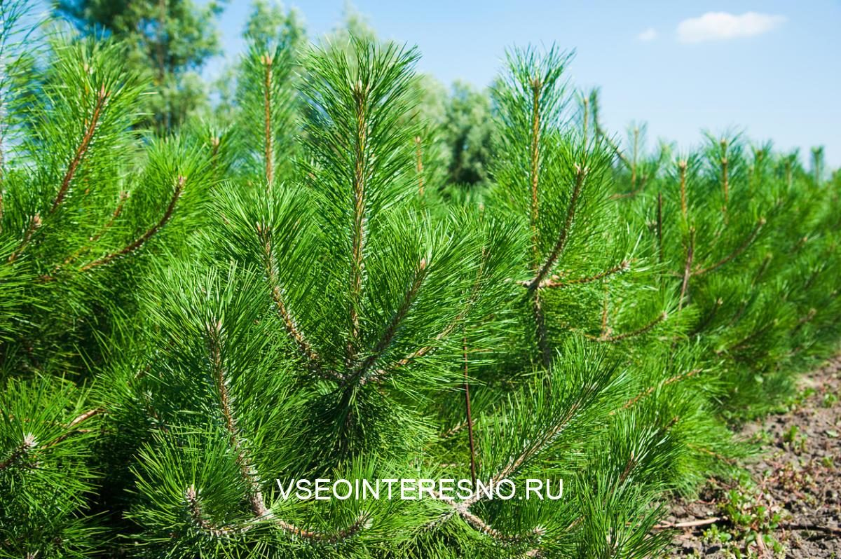 tree-farm-nursery-plantationyoung-forest-grow