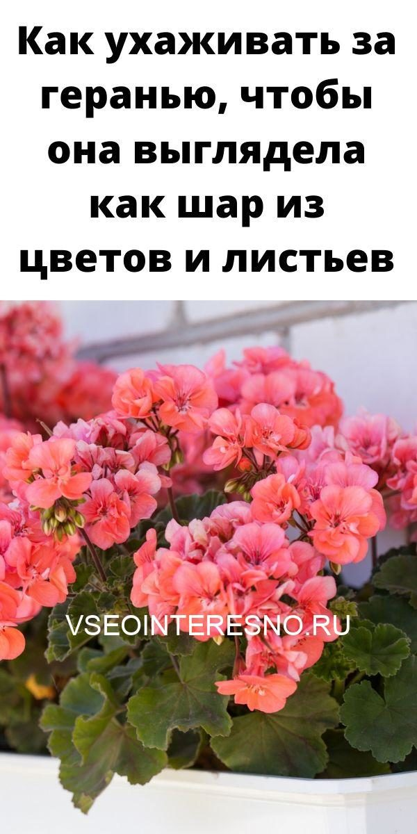 9-pravil-pomogayuschih-dobitsya-buynogo-tsveteniya-orhidey-7829615