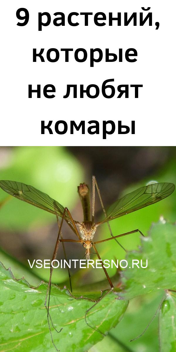 9-rasteniy-kotorye-ne-lyubyat-komary-8932514