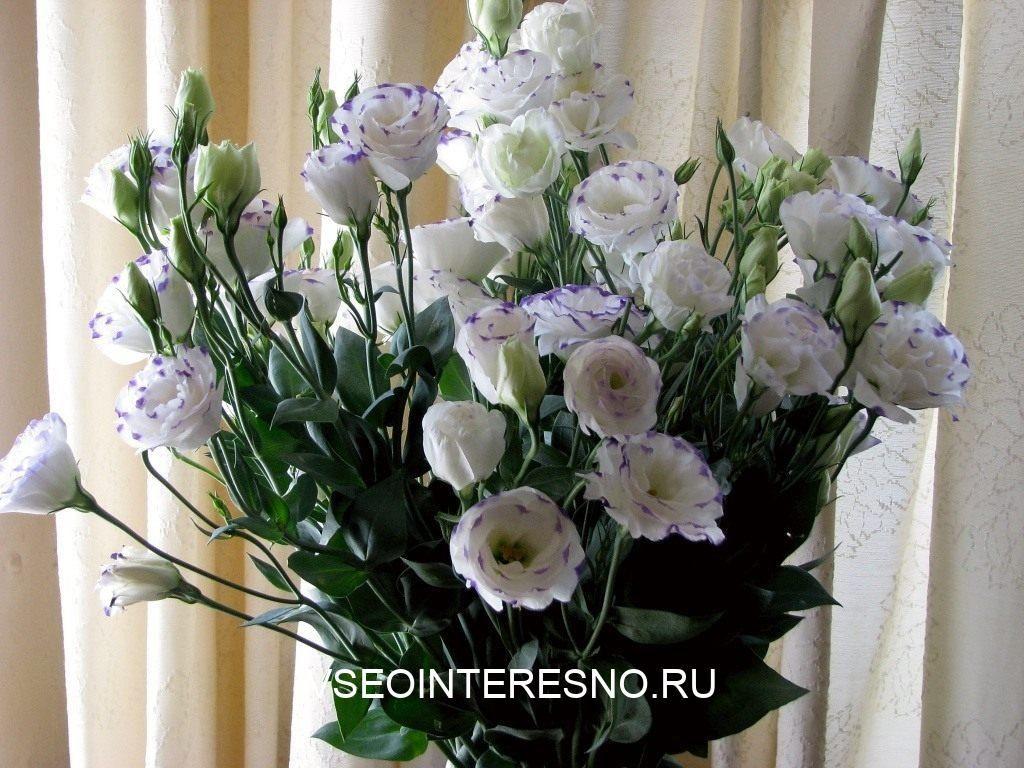 eustoma_03-4899594