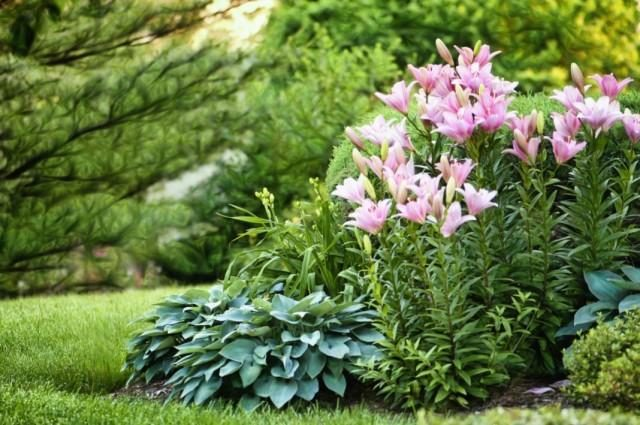 garden-01-640x425-1-5483913
