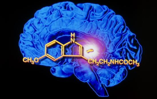 gormon-vechnoj-zhizni-melatonin-5169787