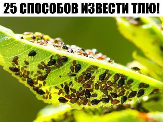 izvesti-tliu-1193004