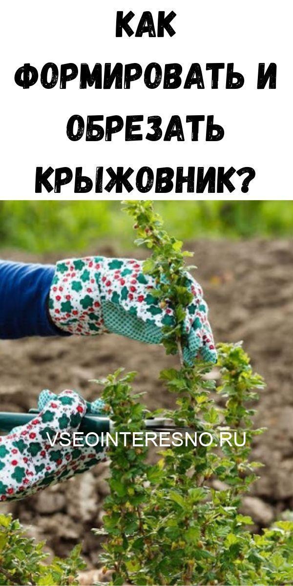 kak-formirovat-i-obrezat-kryzhovnik-3676533
