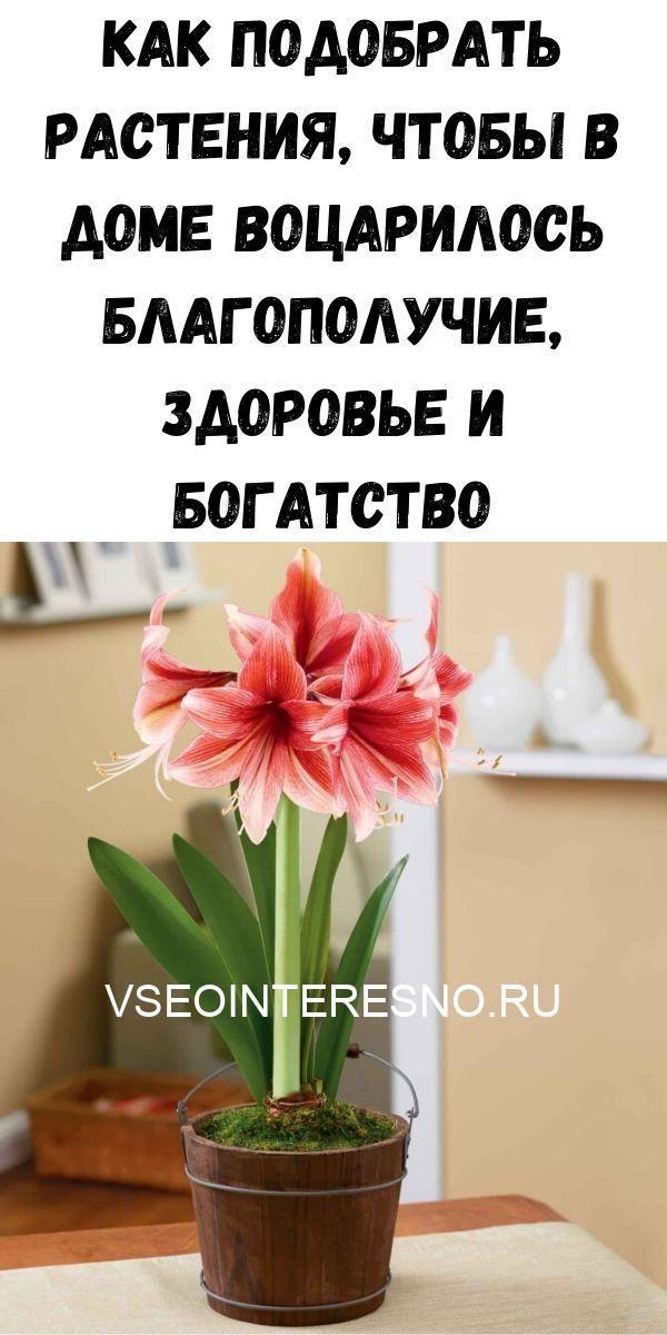 kak-podobrat-rasteniya-chtoby-v-dome-votsarilos-blagopoluchie-zdorove-i-bogatstvo-6849305