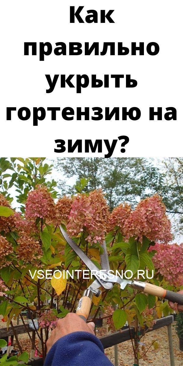 kak-pravilno-ukryt-gortenziyu-na-zimu-3295002