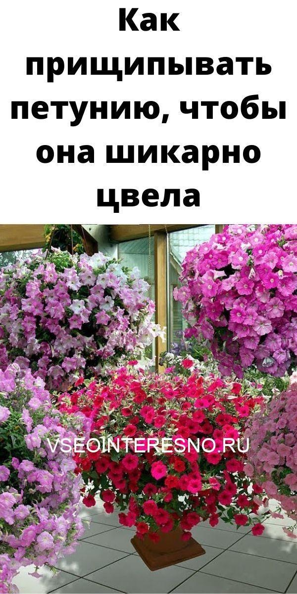 kak-prischipyvat-petuniyu-chtoby-ona-shikarno-tsvela-9059268