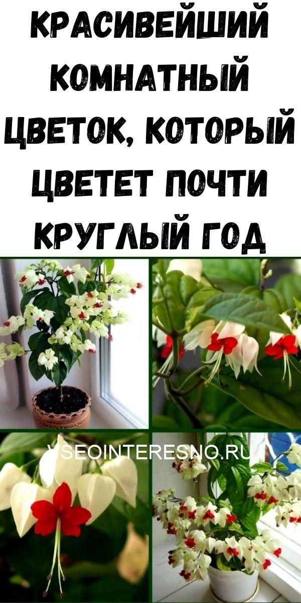 krasiveyshiy-komnatnyy-tsvetok-kotoryy-tsvetet-pochti-kruglyy-god-1806383