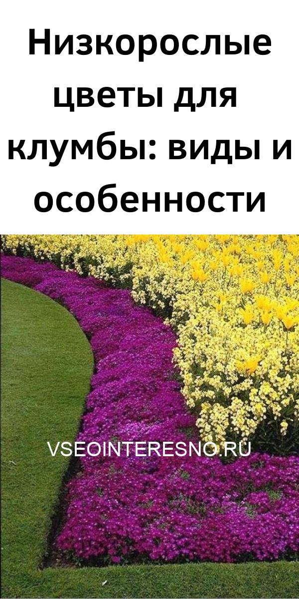 nizkoroslye-tsvety-dlya-klumby_-vidy-i-osobennosti-1343736