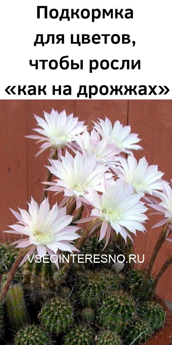 podkormka-dlya-tsvetov-chtoby-rosli-kak-na-drozhzhah-1983876
