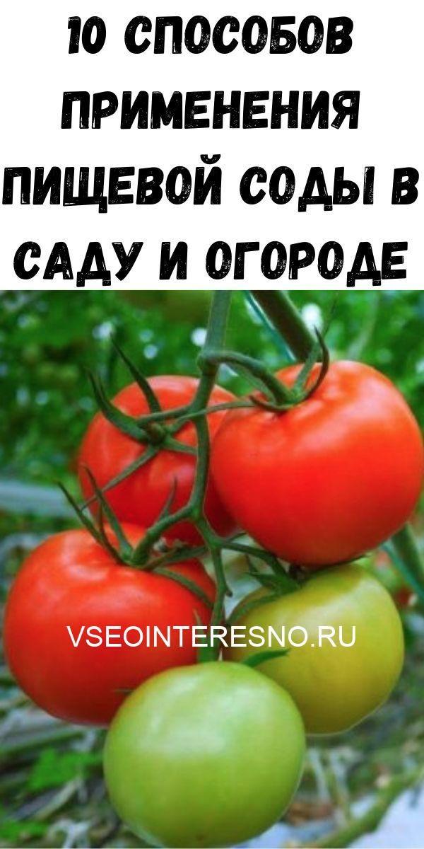 uprazhneniya-dlya-ukrepleniya-poyasnitsy-i-zdorovya-pochek_-vsego-5-minut-v-den-zdorovym-byt-legko-29-9351485