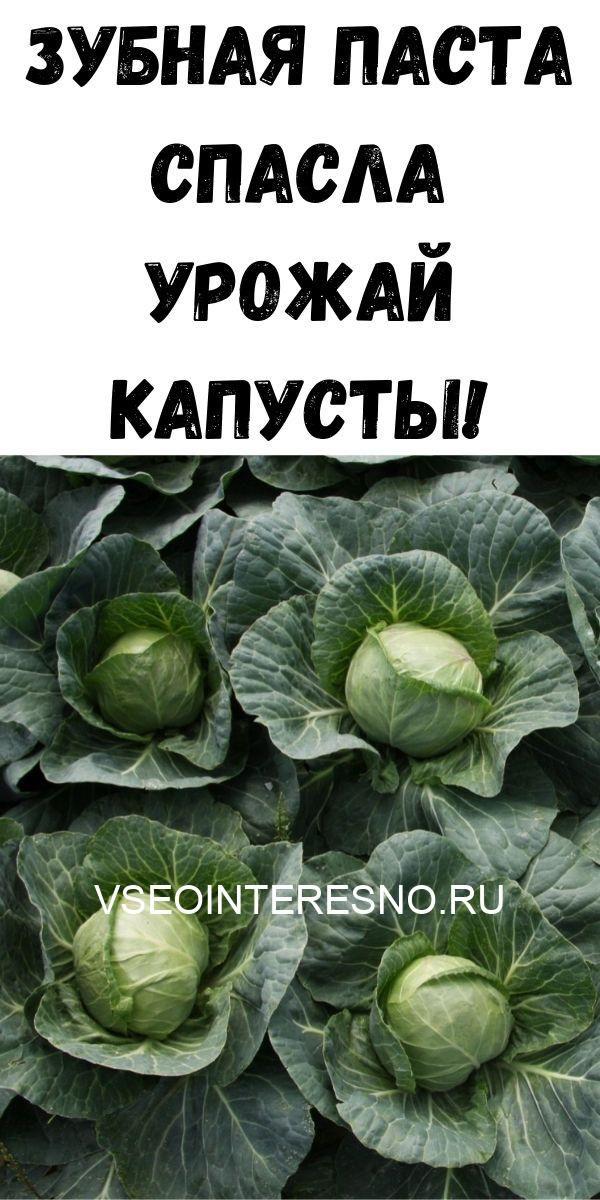 zubnaya-pasta-spasla-urozhay-kapusty-4090075